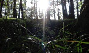 Prima lezione di Poesia – Rilke
